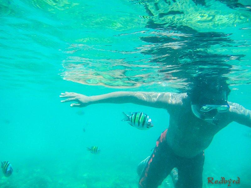 Krabi Andaman Sea Snorkeling Thailand