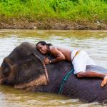 Pai-Elephants-Karen Village