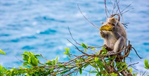 Uluwatu Macaque Uluwatu Cliffs